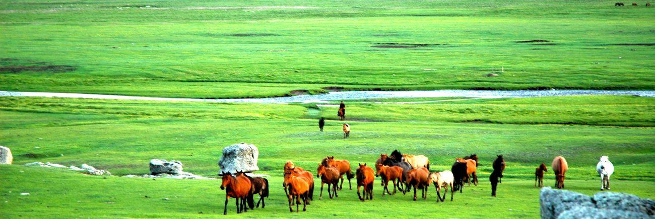 Chevaux vallée Orkhon Mongolie