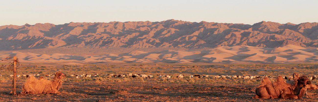Massif de Gurvan Saikhan Gobi Mongolie