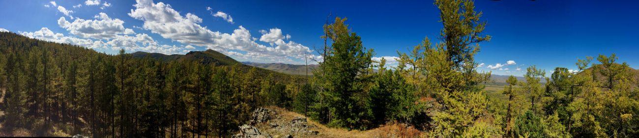 forêt sur les hauteurs de la vallée d'Orkhon, Mongolie