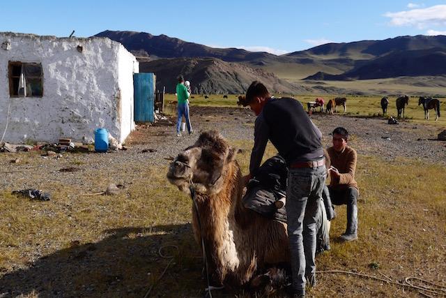 Camp Altai Mongolie