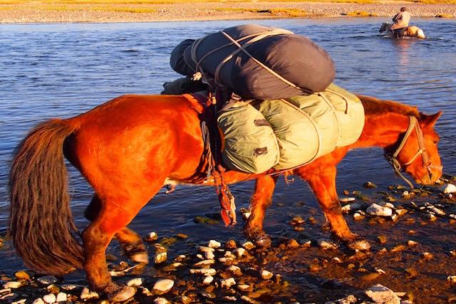 Cheval de bât trappeur cheval