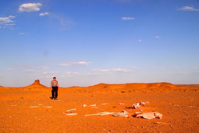 Gobi désert de Mongolie