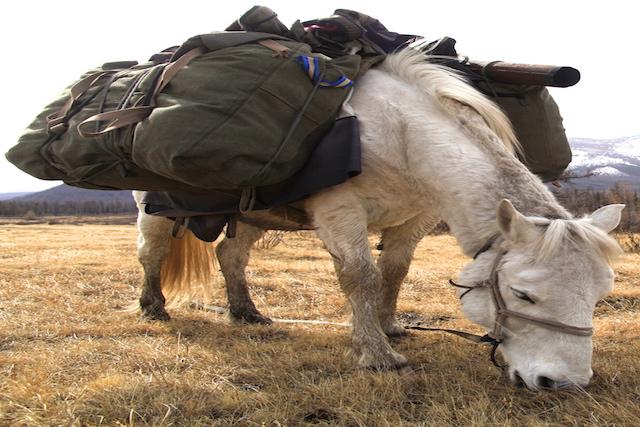 Sacoches cheval de bât